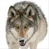 diamondwolf5